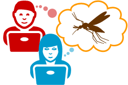 TAKE THE MOSQUITO QUIZ